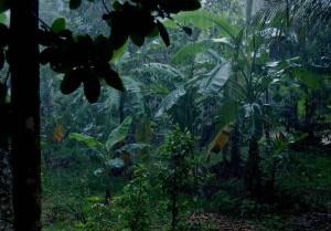 rain_in_kerala1